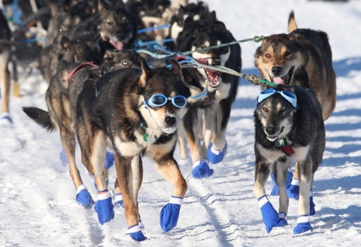 160315105152-05-iditarod-race-2016-super-169-e1501824713457.jpg
